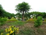 Vườn sau nhà